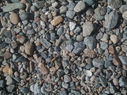 Shell Among Stones