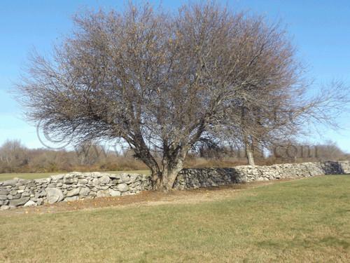 Stone Wall Chafee Refuge