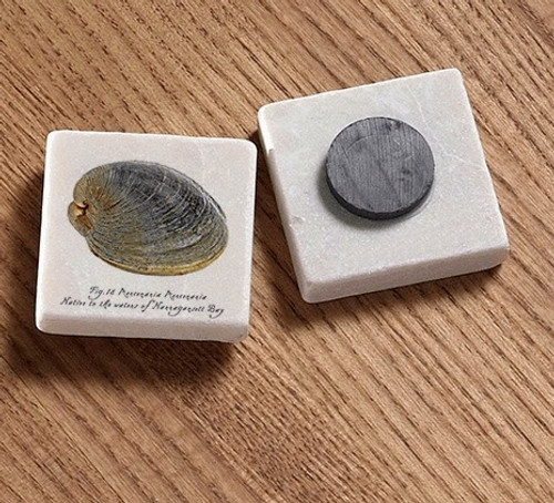 Tile Magnet - Native Quahog