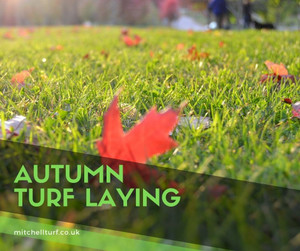 Autumn Turf Laying