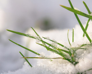 What You Need To Know About Laying Turf In Winter