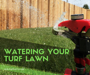 How Often To Water Lawn In Summer
