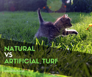 Natural turf vs artificial turf – which is better?