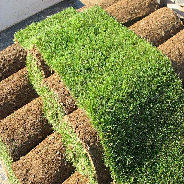 Premium Lawn Turf Rolls