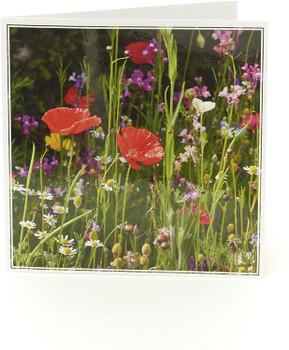 6 x Wild Poppy Blank Royal Horticultural Society Card