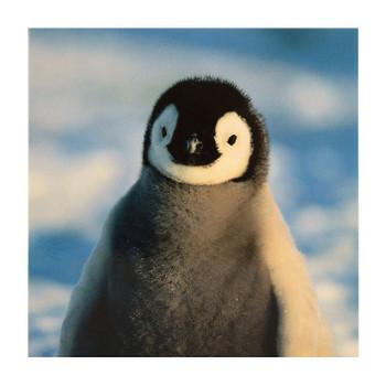 """Penguin"" Christmas Card"