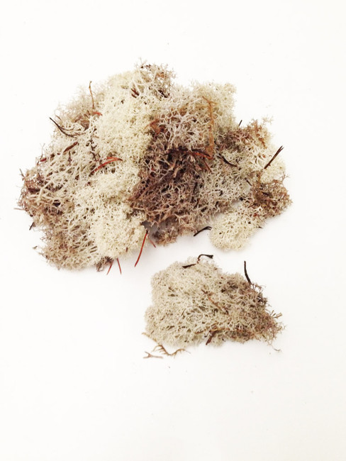 Reindeer Moss, natural - Embellishments