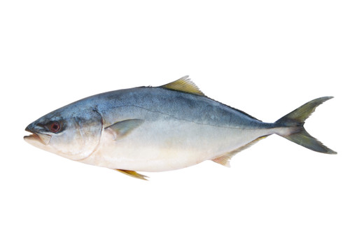 Yellowtail - Whole - Call for Availability