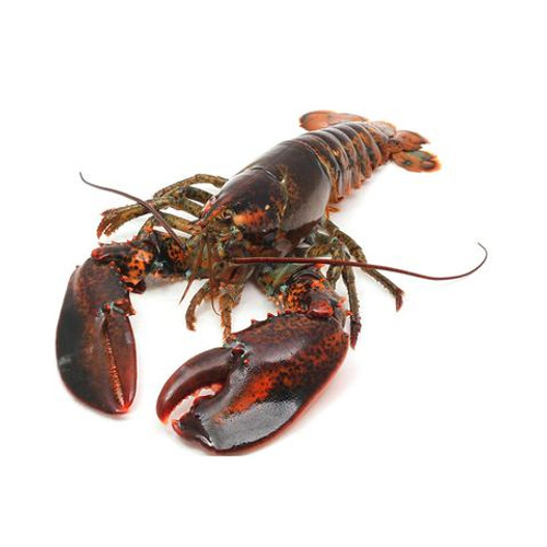 Maine Lobster - Whole - Call for Availability