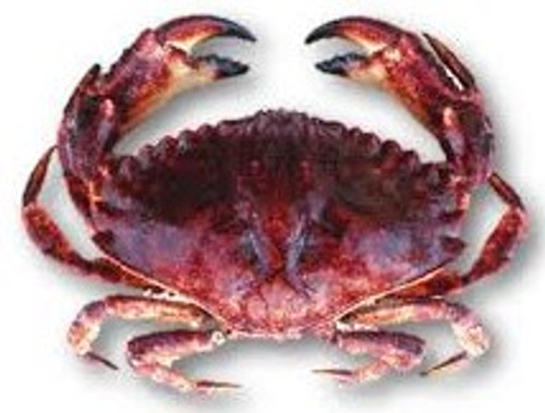 Pacific Rock Crab - Select - Whole - Call for Availability