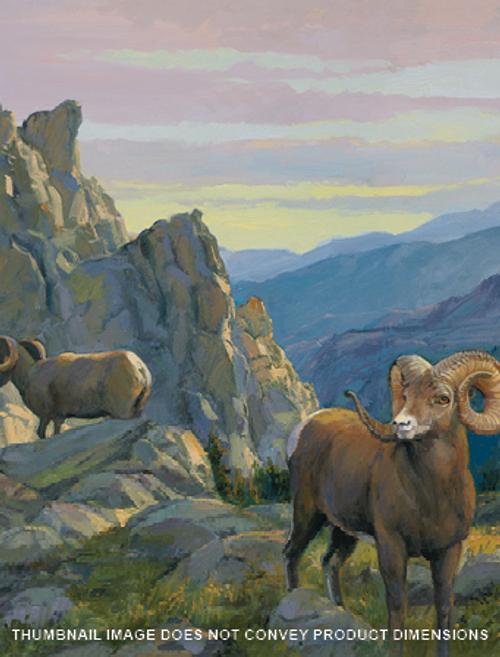 Desert Rams