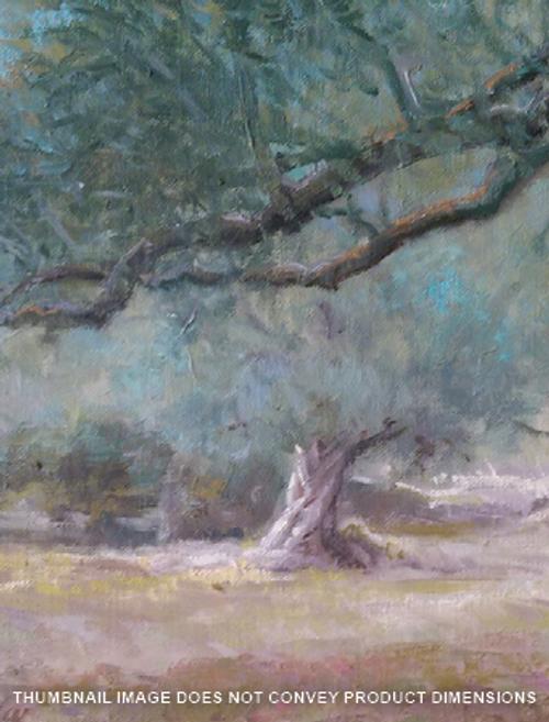 Garden & Olive Orchard of Gethsemane