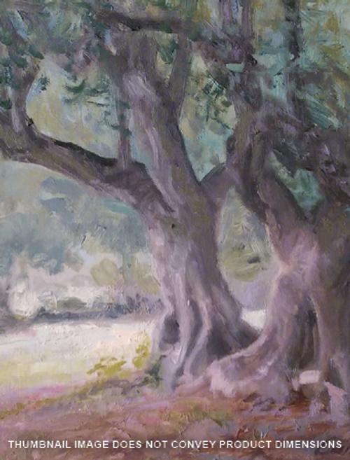 Olive Orchard & Garden of Gethsemane
