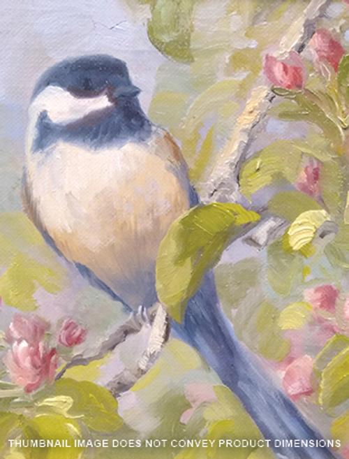 Chickadee on a Cherry Blossom