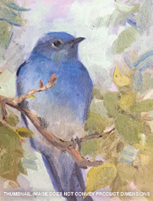 Mountain Blue Bird on an Aspen Branch