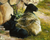 Linda Curley Christensen Black Lambs
