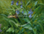 Linda Curley Christensen Tiger Swallow