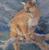 Linda Curley Christensen Cougar Lookout