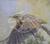 Linda Curley Christensen Meadowlark in Flight