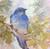 Linda Curley Christensen Mountain Blue Bird on an Aspen Branch