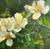 Linda Curley Christensen White Spring Flowers