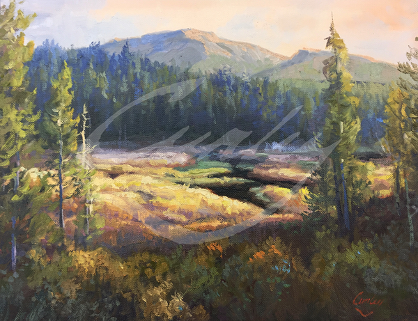 Linda Curley Christensen Meadow in the Light