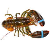 Live Hard Shell Lobster 2 Pack - 1.25-1.5lb x 2