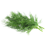 Dill Bunch - 1ct
