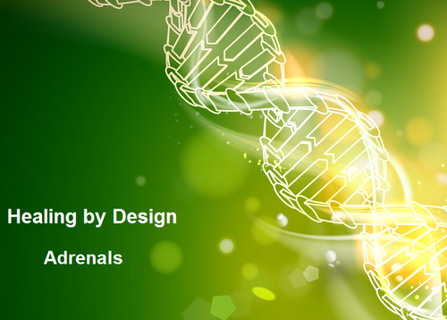 Healing by Design Series - Adrenals MP3 Audio Download
