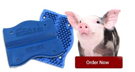 buy-now-pig.jpg