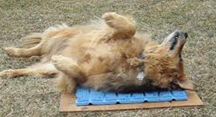 dog-using-scratchnall.jpg