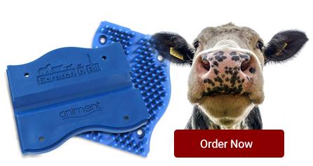 order-now-cow.jpg