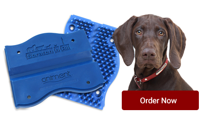 order-now-dog.jpg
