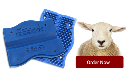 order-now-sheep.jpg