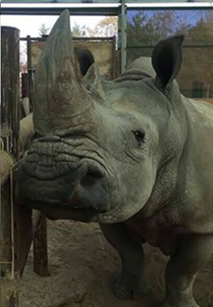 rhino-itching.jpg