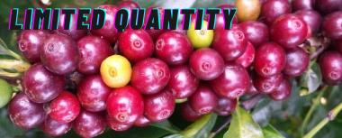 Zambia Coffee Anaerobic Fermentation