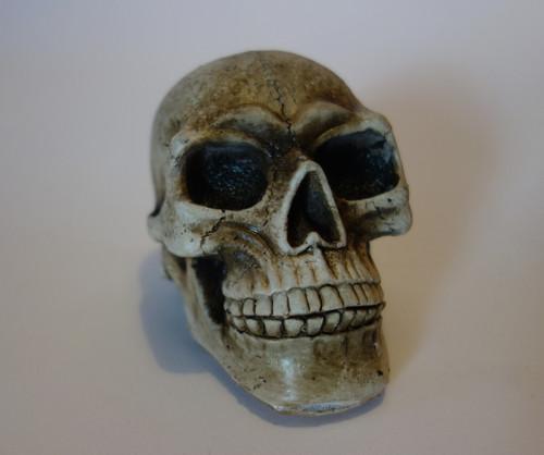 Halloween Skull Decoration or Costume Accessory