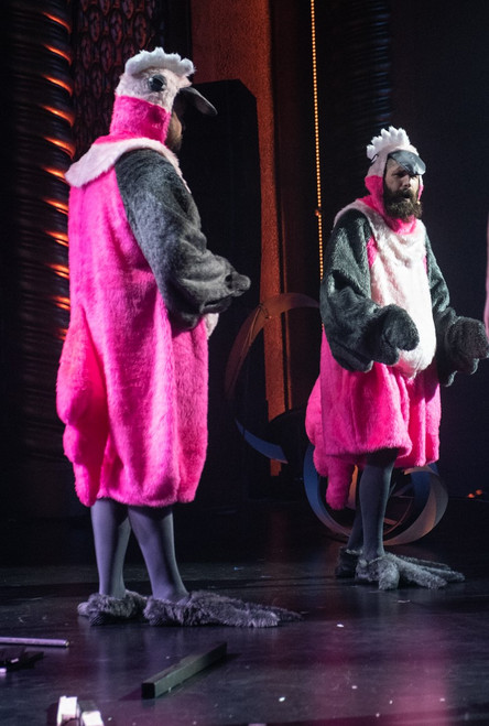 Galah costumes for hire (Picture created by the Melbourne Comedy Festival)