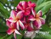 Katie Moragne Plumeria