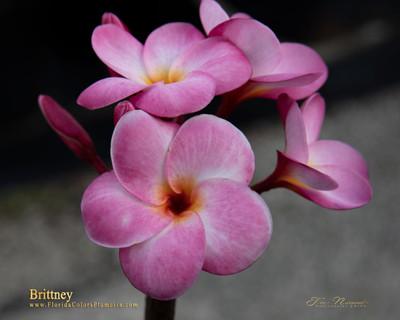 Brittney Plumeria