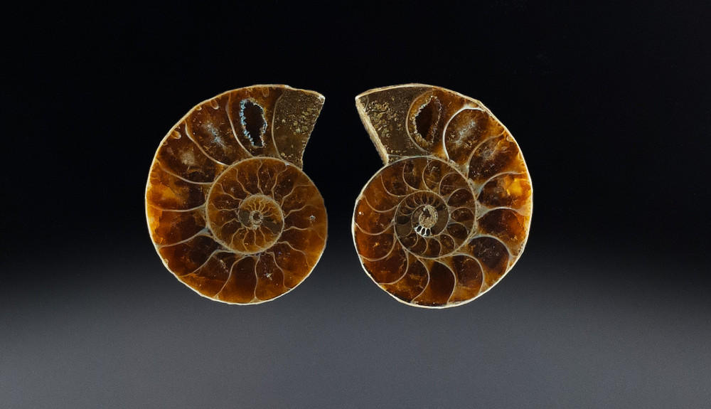 Marvelous Fossil Ammonite Pair, Each 44x29.5x6mm, 38.4 cts Combined