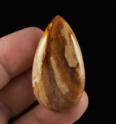 Interesting Petrified Wood Cabochon