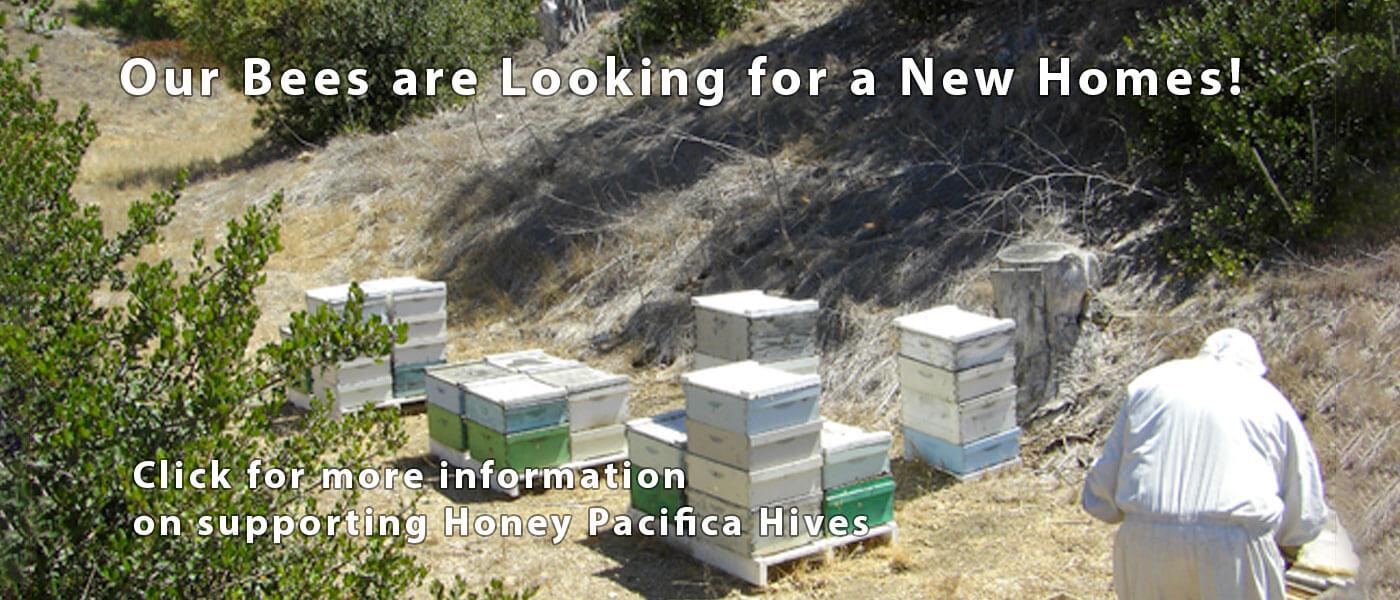 Looking for beekeeping land
