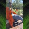 Sariah wearing 1B Off Black with Neon Green Tips kanekalon