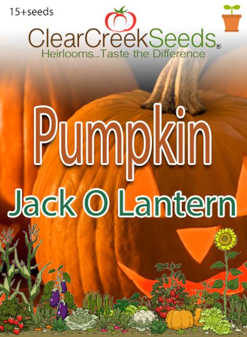 Pumpkin - Jack O Lantern (15+ seeds)