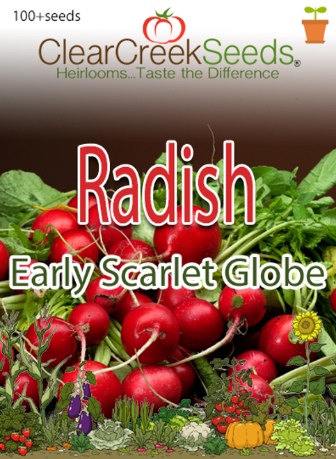 Radish - Early Scarlet Globe (100+ seeds)