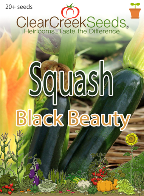 Squash Summer - Black Beauty (20+ seeds)