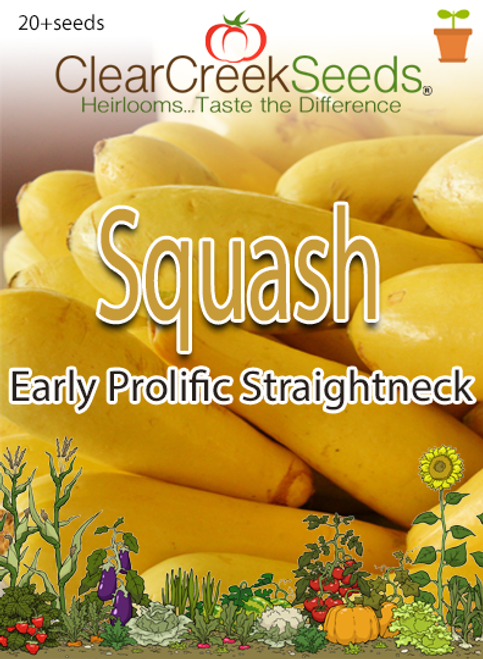 Squash Summer - Early Prolific Straightneck (20+ seeds)