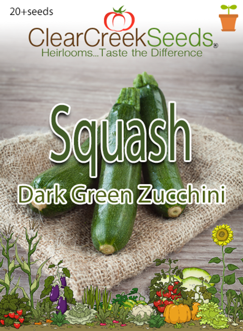 Squash Summer - Dark Green Zucchini (20+ seeds)
