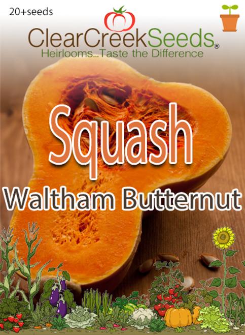 Squash Winter - Waltham Butternut (20+ seeds)
